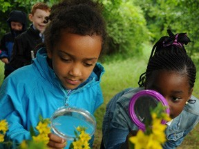 Forest School CPD for Staff: Outdoor and Woodland Learning